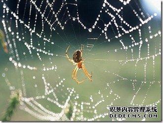 如何建立一张强大的网站蜘蛛网